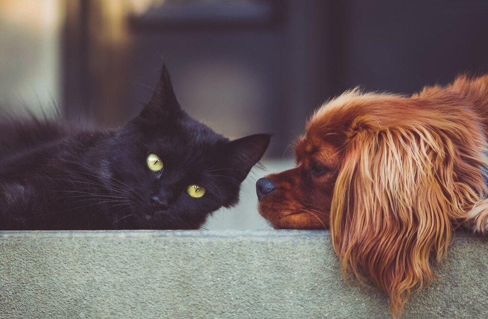 VÕRDLUS | Kass või koer: kumb on sinu südamesõber?