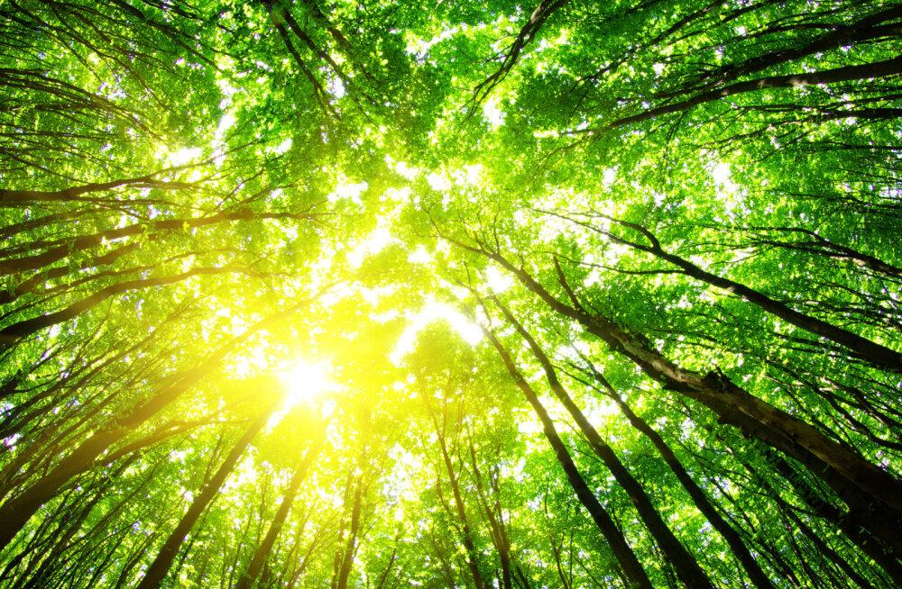 Täna toimub üle-eestiline Metsameeleavaldus vähemalt 24 eri paigas