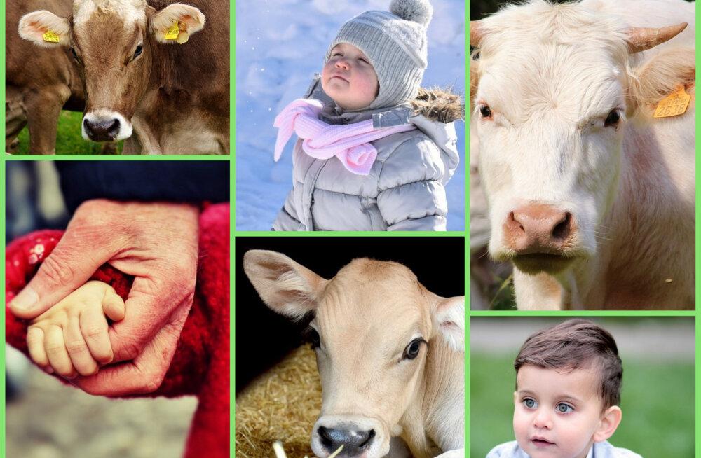 ARVA ÄRA | Milliseid lehmade seas levinud nimesid on inimestele pandud?