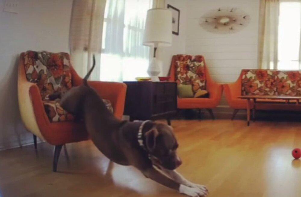 Humoorikas VIDEO | See uni on hallil esmaspäeva hommikul alati kõige magusam!