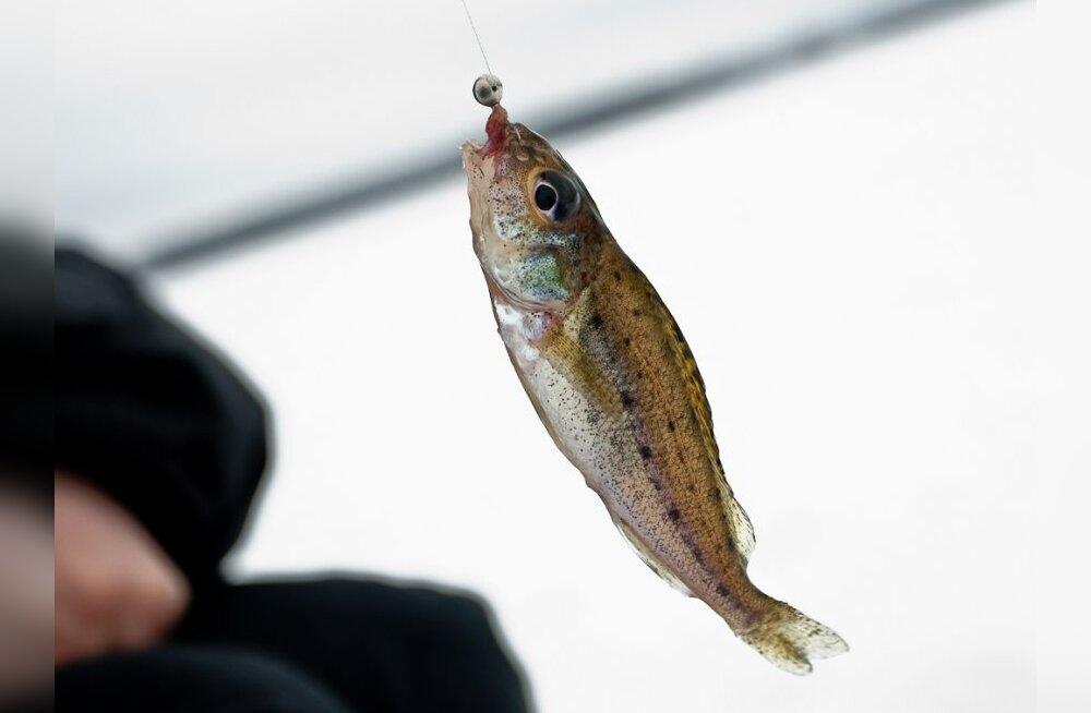 Võrtsjärve kala- ja käsitöölaat kutsub huvilisi Jõesuusse