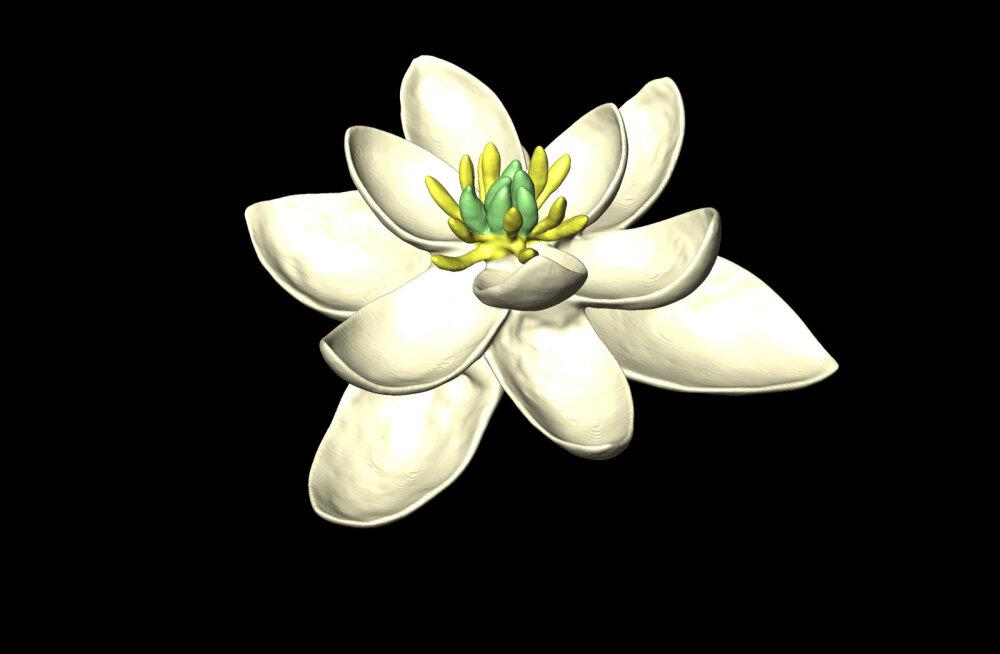 Kõigi lillede vanaisa: niisugune nägi miljoneid aastaid tagasi välja maailma esimene õis
