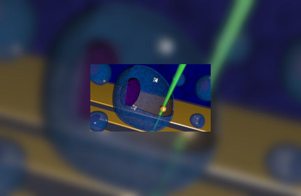 Nanotermomeeter suudab mõõta rakkude temperatuuri mikroskoopilisi muutusi