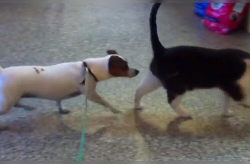 Kassid vs koerad: kas need aegumatud videoklipid panevad ka sind igal korral naerma?