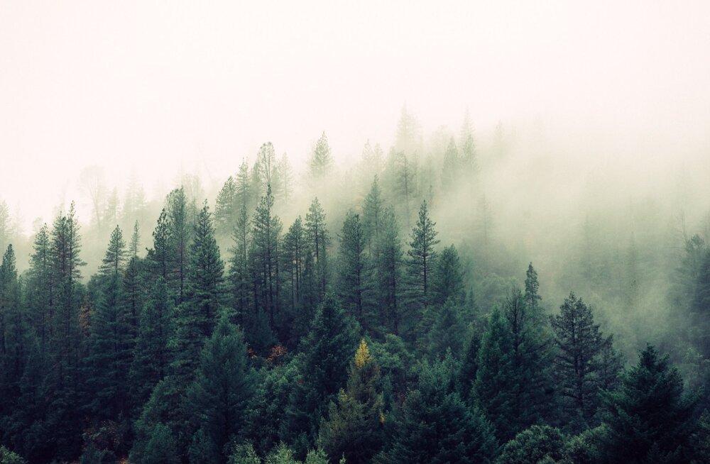 Puud tunnevad kahjurite lõhna ning oskavad nende rünnakuks valmistuda