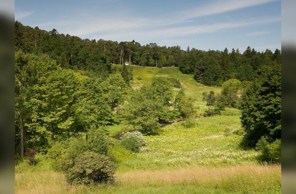 Oru pargi maastikukaitseala tehti väiksemaks