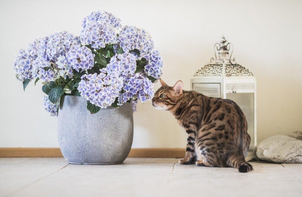 Kass Müstik