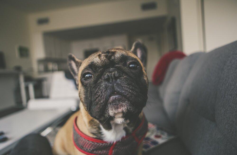 Kas koerad on tõesti värvipimedad?