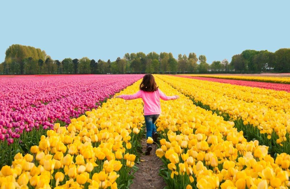 В Риме готовятся к открытию парка тюльпанов
