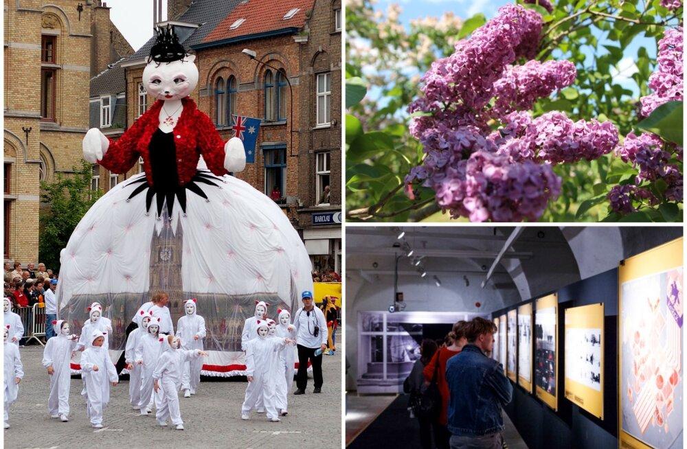 Сиреневый рай, открытие фонтанов в Петергофе, ночь музеев и парад котов: цветущий май — куда поехать и что посмотреть?
