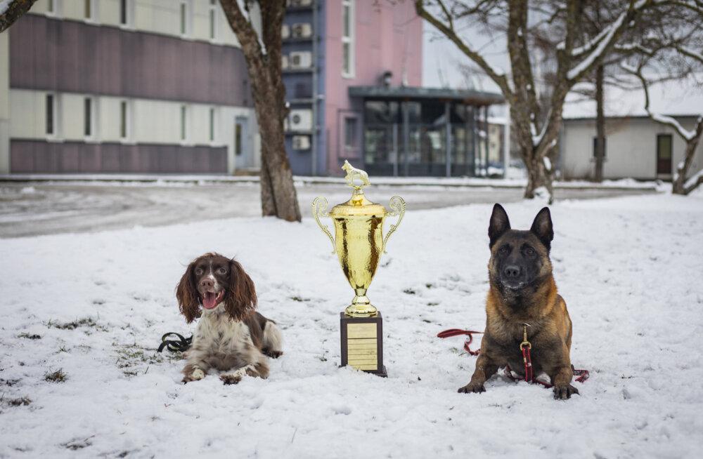 ФОТО | Пыхьяская префектура наградила лучших служебных собак и кинологов. Они находили преступников, оружие и наркотики