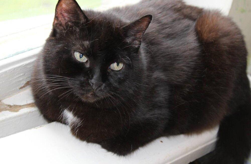 Selle musta kassi nimi on Kelly ja ta ootab praegu ühes hoiukodus Tõrvas oma õiget kahejalgset sõpra. Kui soovid Kellyle või mõnele teisele mustale kassile eelkirjeldatust paremat saatust pakkuda, siis vaata Pesaleidja kodulehekülge!