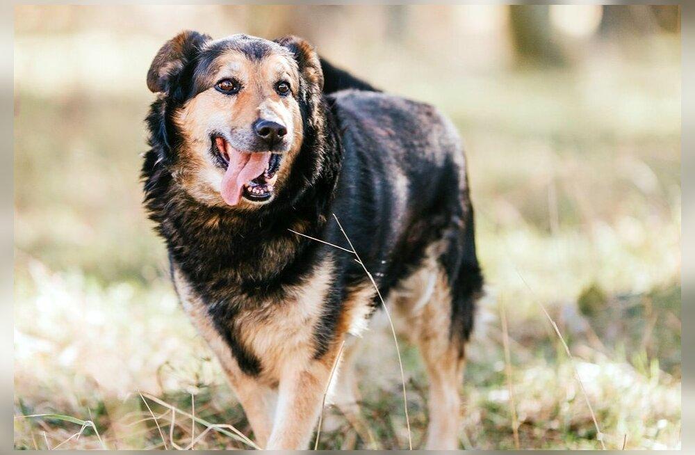 Valvuriametist koondatud koerad sattusid varjupaika