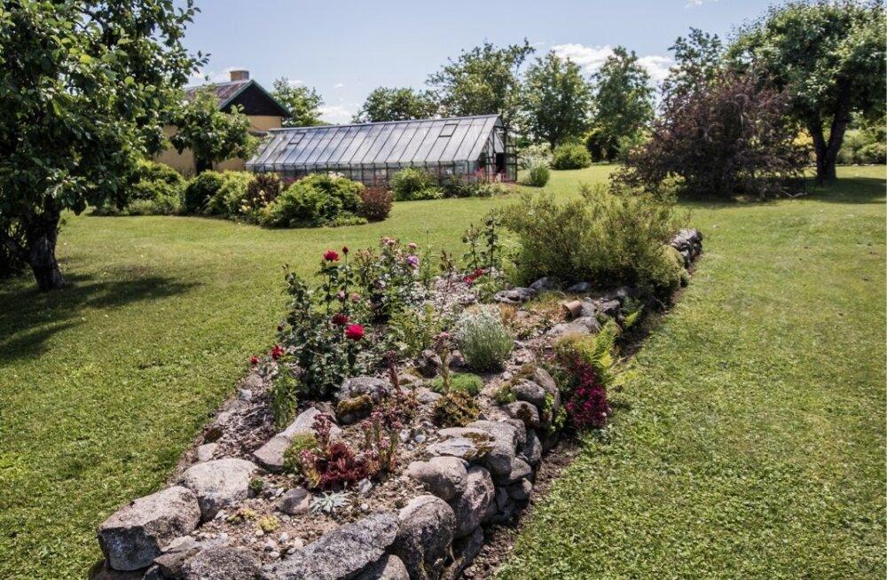 Risttee talu taimeaed