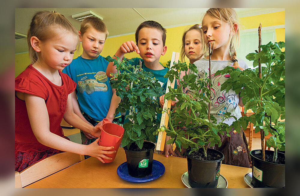 Tuhanded lapsed kasvatavad tomateid