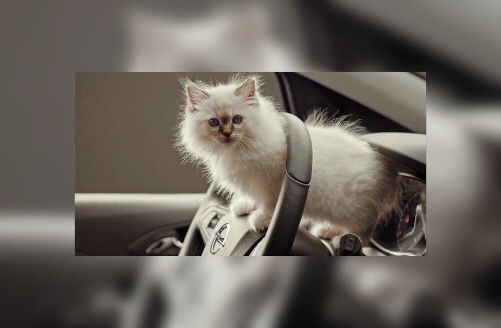 Lemmikloomad autos