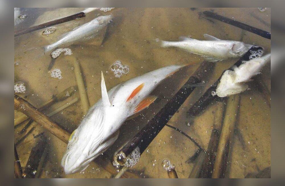 Miks kalad hukkuvad ehk ummuksile jäänud vesi