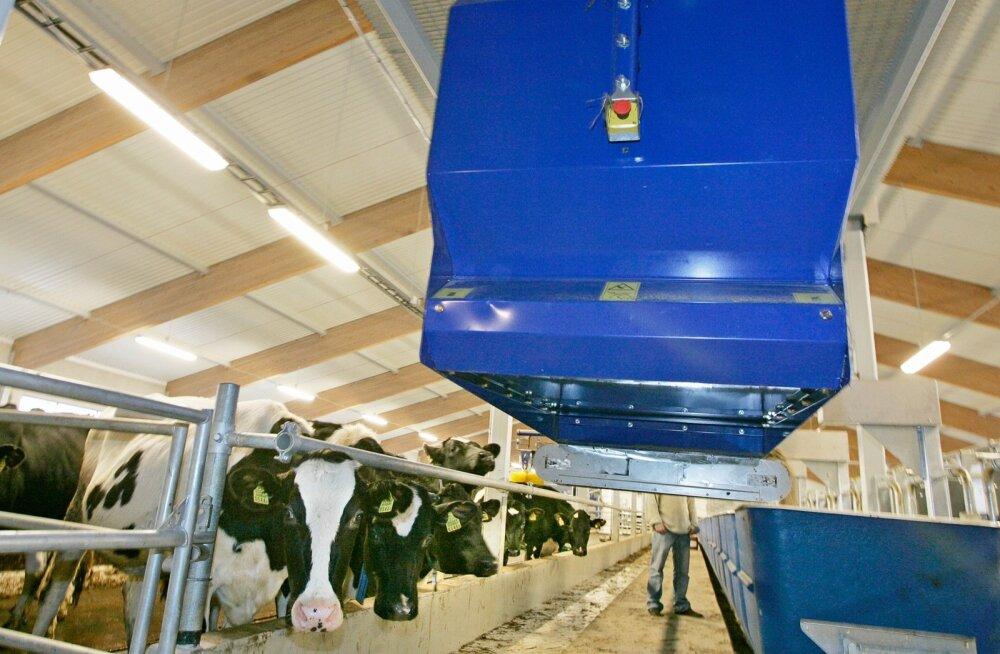 Innovatsioon: loomakasvatuses on juba pea kõiki töid – söötmine, lüps, sõnniku eemaldamine – võimalik teha automaatselt ja töötaja istub peamiselt vaid arvuti taga.