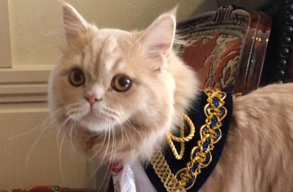 ВИДЕО: Кошка с хвостом белки стала звездой соцсетей