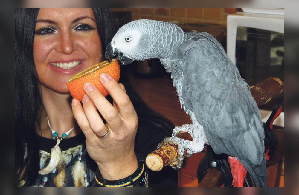 Mitu papagoid on Eestimaal?