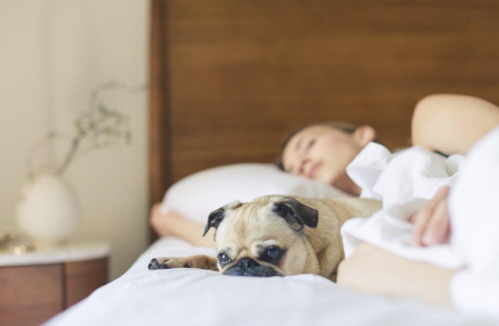 Unearst selgitab, kuidas teha vahet kvaliteetsel unel ja unehäirel