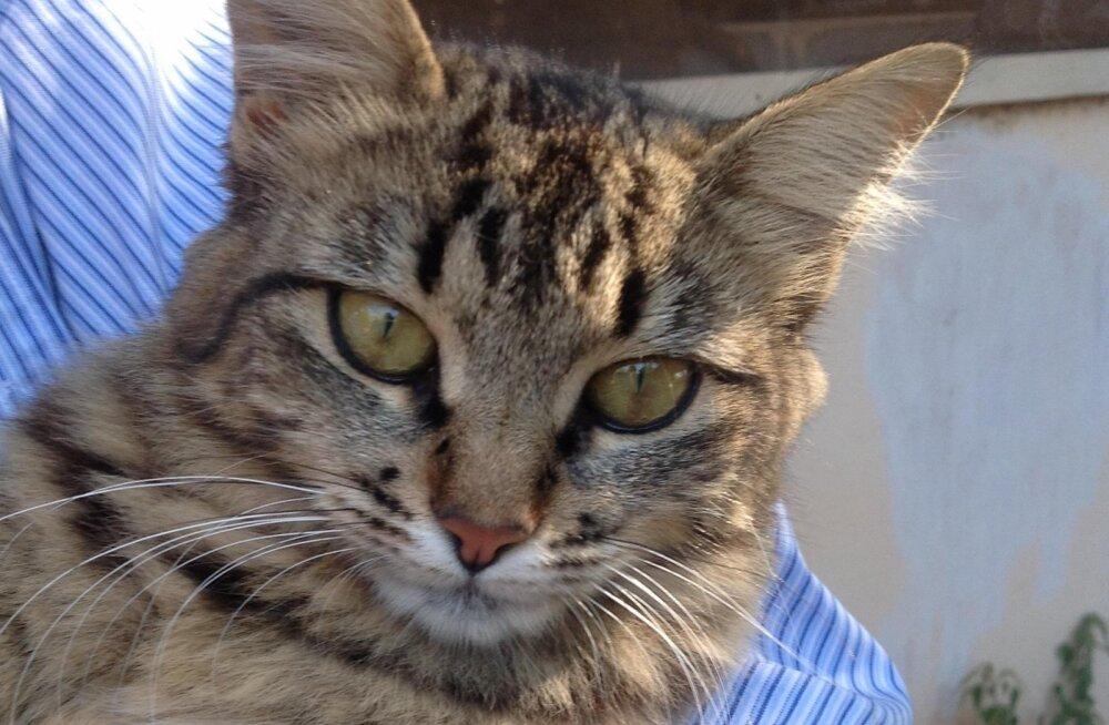 Soovitused algajale kassipidajale: millist jooginõud või kraapimisposti kass vajab