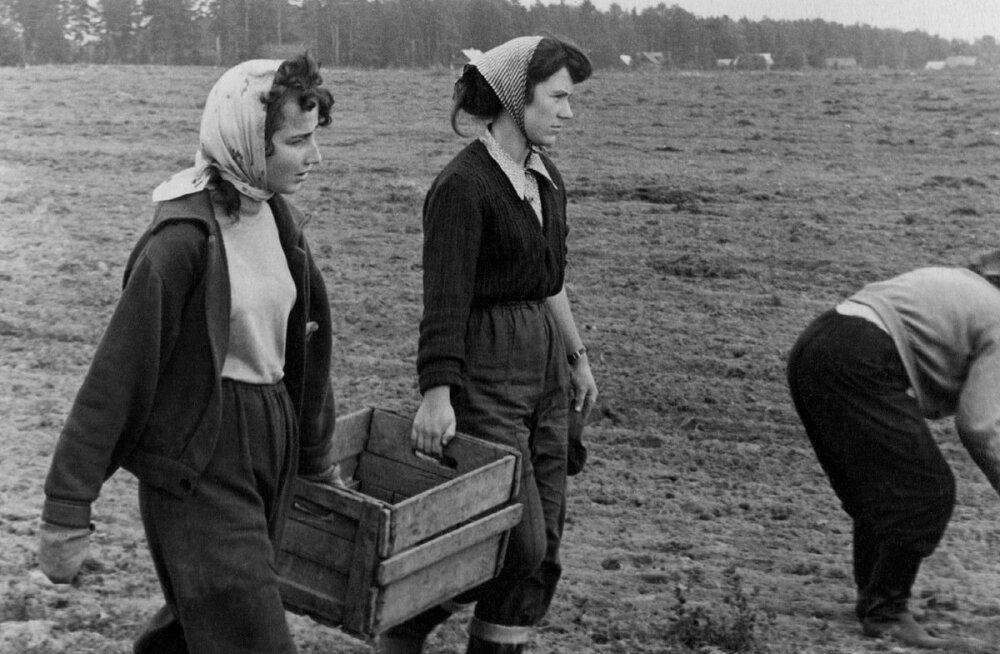 Meie tudengineiud päästavad nõukogude põllumajandust.