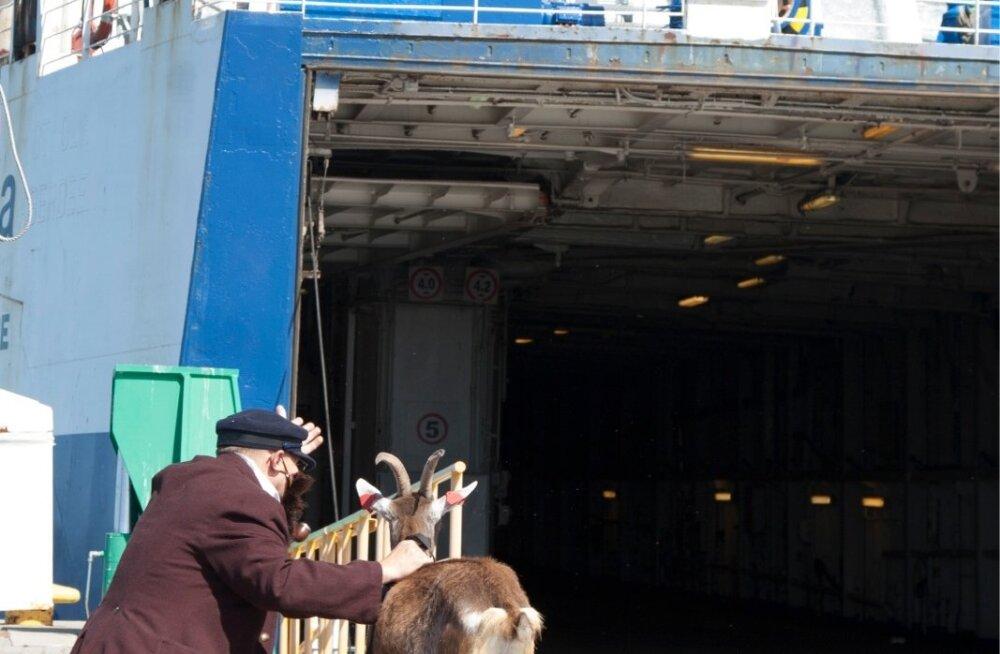 MTÜ Vanamees ja Kits eestvõttel avati Hiiumaal Heltermaa sadamas  eelmisel nädalal Simson von Seakylli ja Paul Männi pronkskuju legendaarsest vanamehest, kes on tulnud kitsele laeva näitama. Praeguses praamikitsikuses mõjub see enam kui sümbool-selt – ig