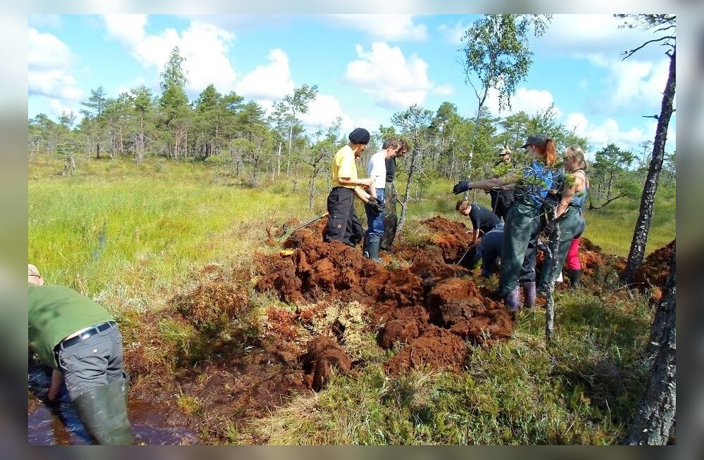 ELFi mullune metsaistutuse tööpäev Nigulas.