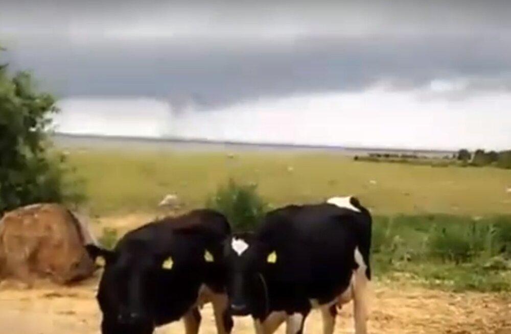 VIDEO | Matsalu lahel möllas vesipüks