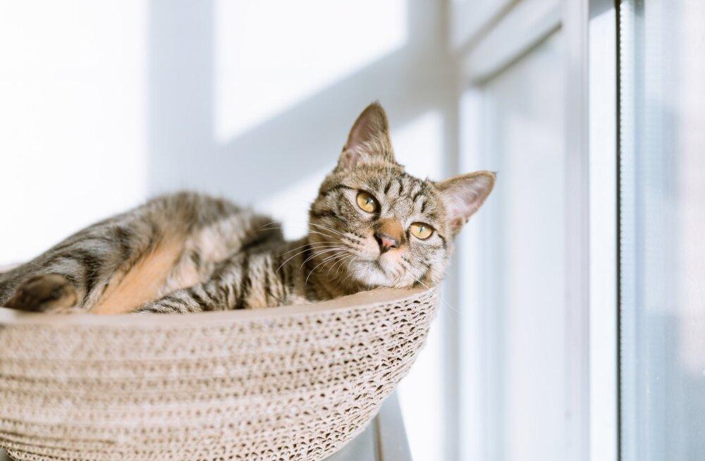 Sellest peaksid hoiduma! Kaheksa asja, mida ei tohiks oma kassile mitte kunagi teha