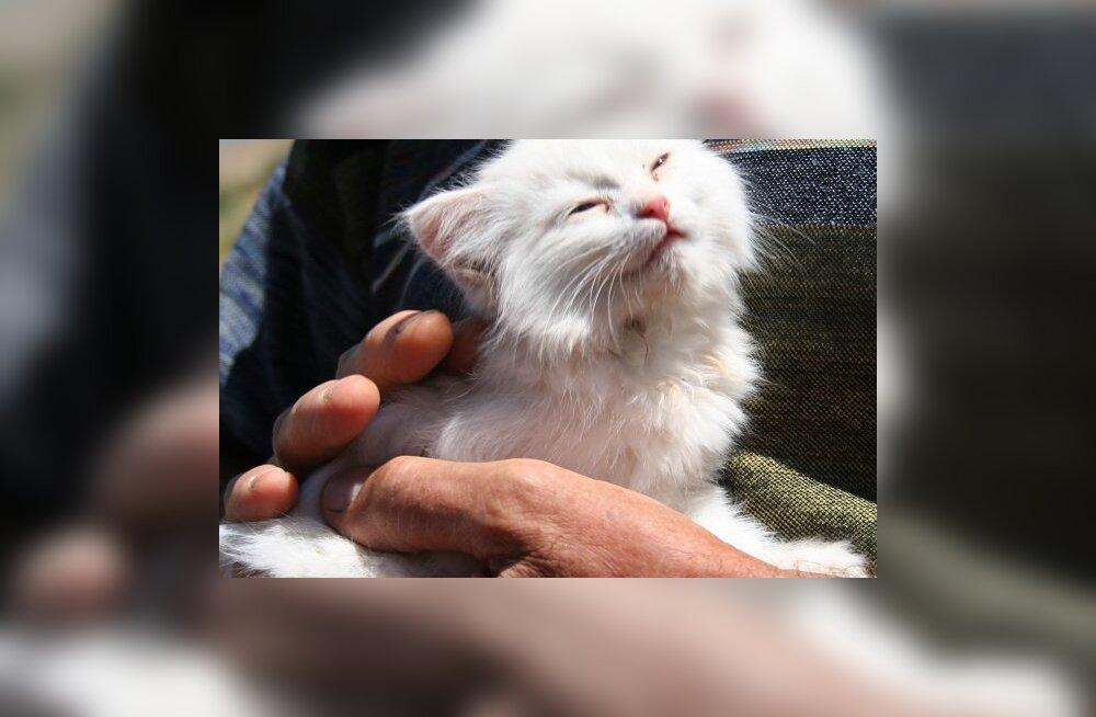 Loomaarst annab nõu: kassil on astma — mida teha ja kuidas haigusnähte leevendada?