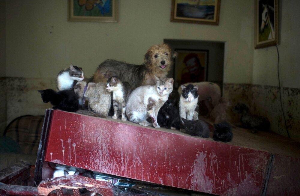 Loomad võivad end üüripinnal ülal pidada kui kukununnud, aga korraldada ka korraliku segaduse.