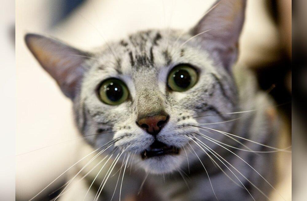 У Риги появится официальный кот