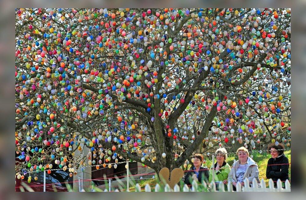 VIDEO: Saksa pensionäri kümne tuhande munaga lihavõttepuu
