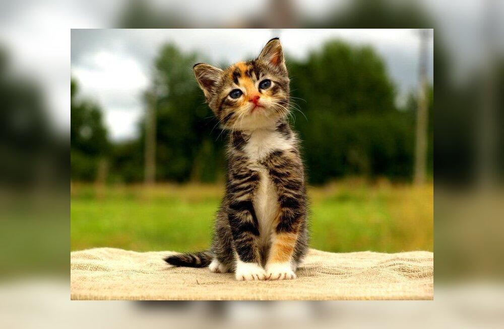 Читатель: брошенные котята защитникам животных не нужны