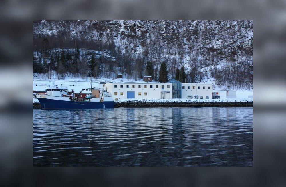 Firma Astafjord Slakteri kalatehas saab eestlaste abiga suuremaks. Tulevikus saadetakse 5000-ruutmeetrisest hoonest päevas välja umbes sada tonni ehk neli veokitäit lõhet.