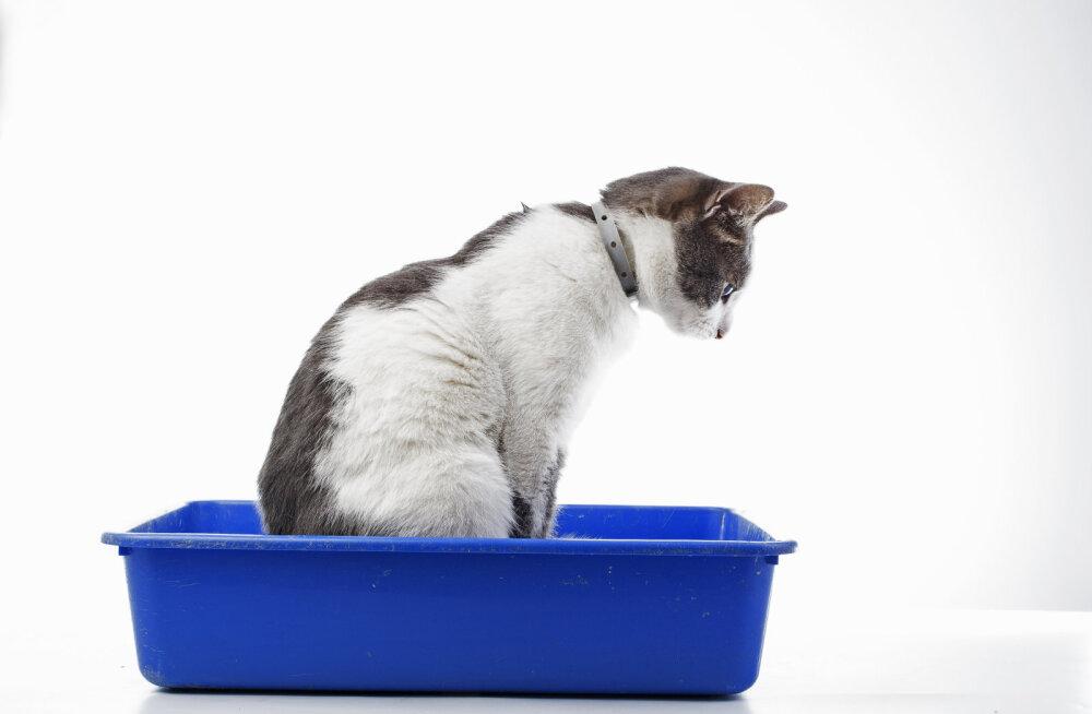 Miks kassid väljaheitele alati liiva peale kraabivad?