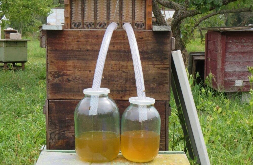 Austraalias välja mõeldud taru kärgedest jookseb mesi otse purki.