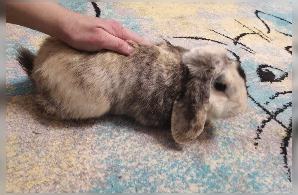 Семья купила кролика из-за клетки и выбросила его в подъезде