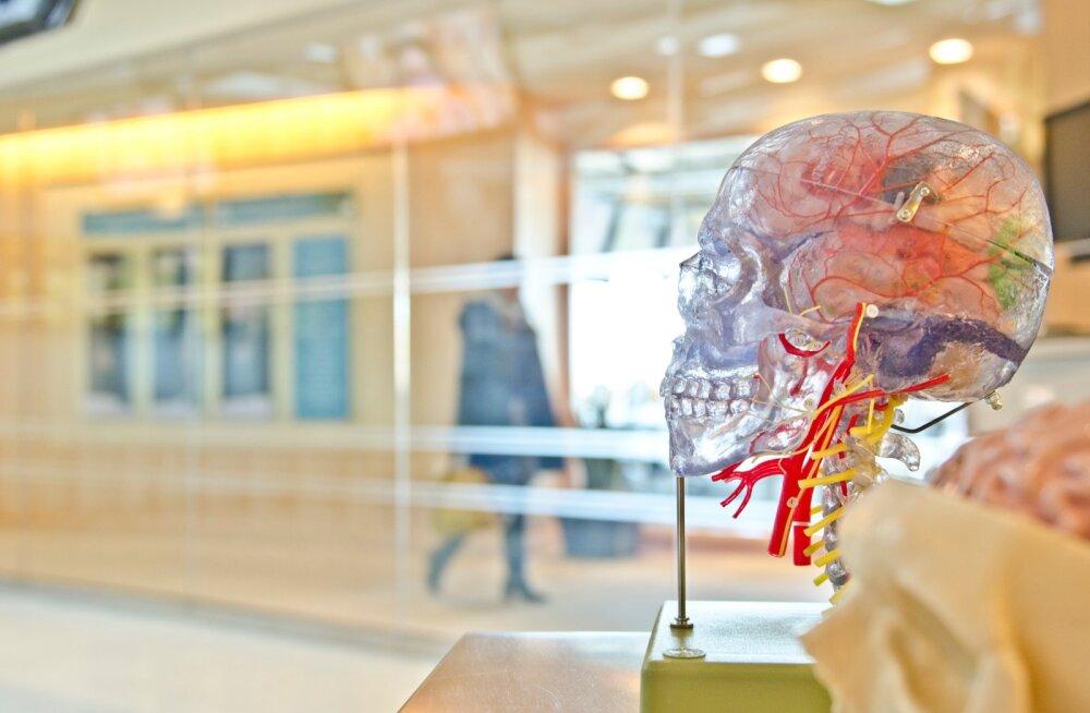 Evolutsioon on kaotanud meie taastuva saba, aga andnud suure aju