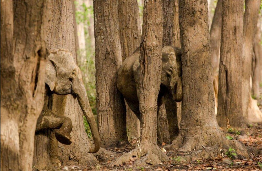 FOTOD | Testi oma silmanägemist! Kas sa leiad piltidele peitu pugenud loomad?