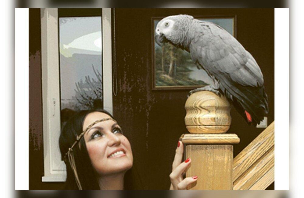 Papagoi õpib uue lause kahe päevaga