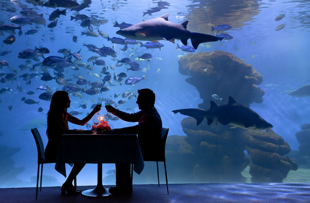 Lemmikud nakatavad – isegi akvaariumikalade pidamine on inimese tervisele ohtlik!