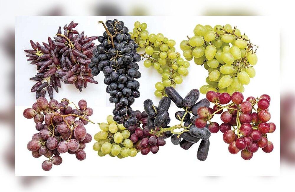 Выбираем лучший сорт винограда: чему и почему отдать предпочтение и где меньше вредных нитратов?