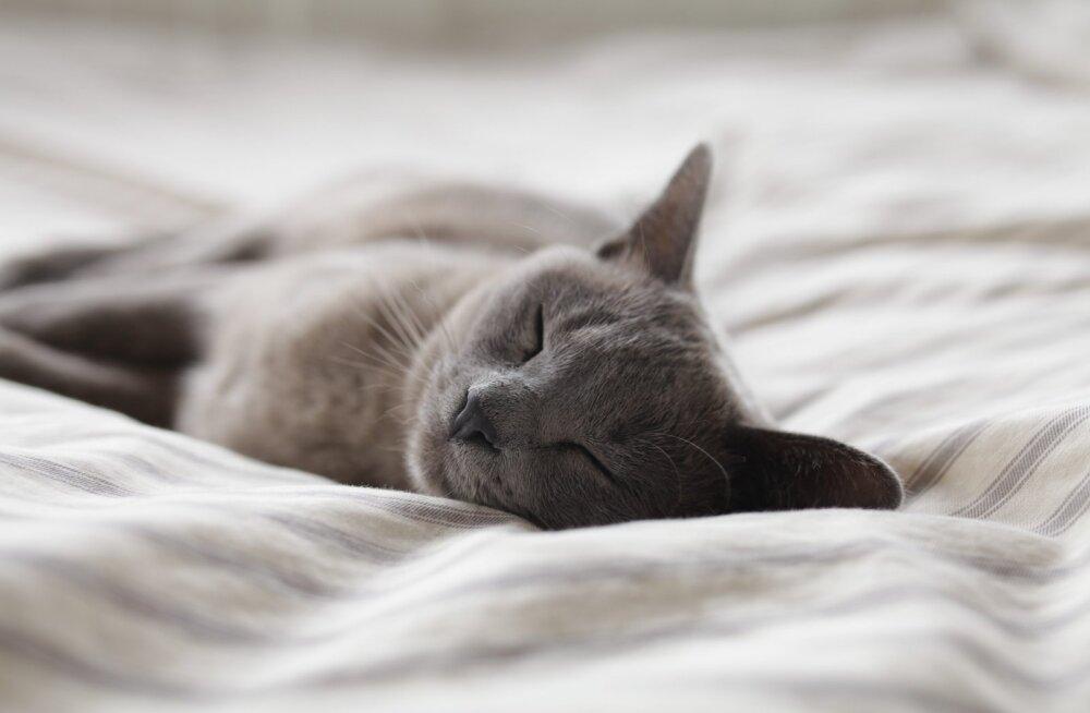 Ekspert vastab: kas ma lihtsalt ei saa magada või ongi mul tõsine unehäire?