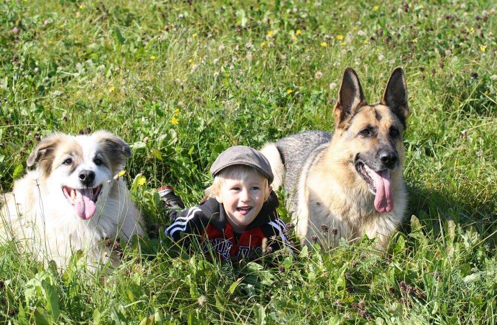 10 viisi, kuidas elu koos lemmikloomaga lapsele head teeb