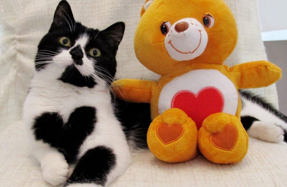 Sõbrapäeva GALERII | Erakordse välimusega kass kannab rinnal uhet südant