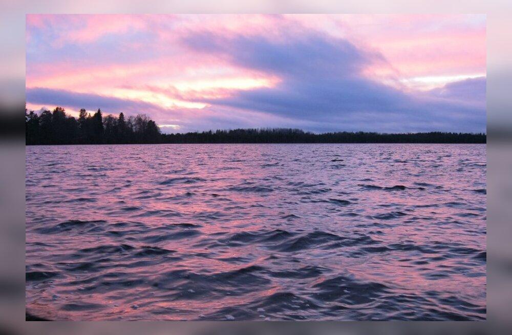 Ökokatastroofi üle elanud Uljaste järve kalad saavad täiendust