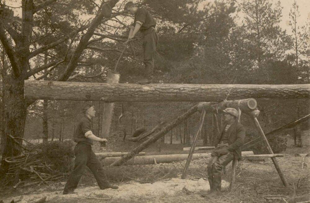 Laudade saagimine palgist, 1933.